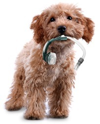 cpap machine for dogs