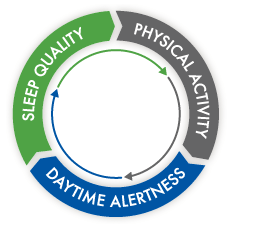 Sleep Quality,Physical Activity,Daytime Alertness